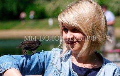 Спасенный скворец вернулся к москвичке, которая выхаживала его птенцом