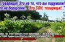 «Борщевика нет..Это сон..» или как В.Н.Коряченко (нач. УЖКХ Префектуры ЮЗАО) «отписывает» волонтеру приюта Щербинка