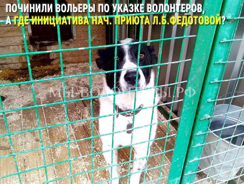 Починили вольеры по указке волонтеров,  а где инициатива нач. приюта Л.Б.Федотовой?