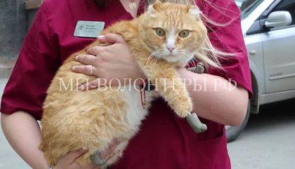 В Новосибирске впервые в мире кошкам установили протезы на все четыре лапы