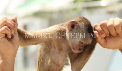Министерство курортов и туризма Крыма намерено требовать уголовного наказания за коммерческое фотографирование с животными