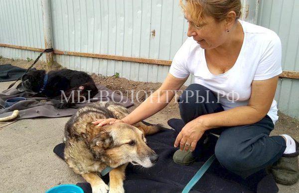Видеознакомство с собаками-«пациентами» ветблока приюта Щербинка от Ирины Сидоровой