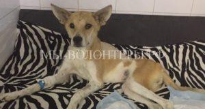 Жители Тверской области спасли пострадавшую собаку