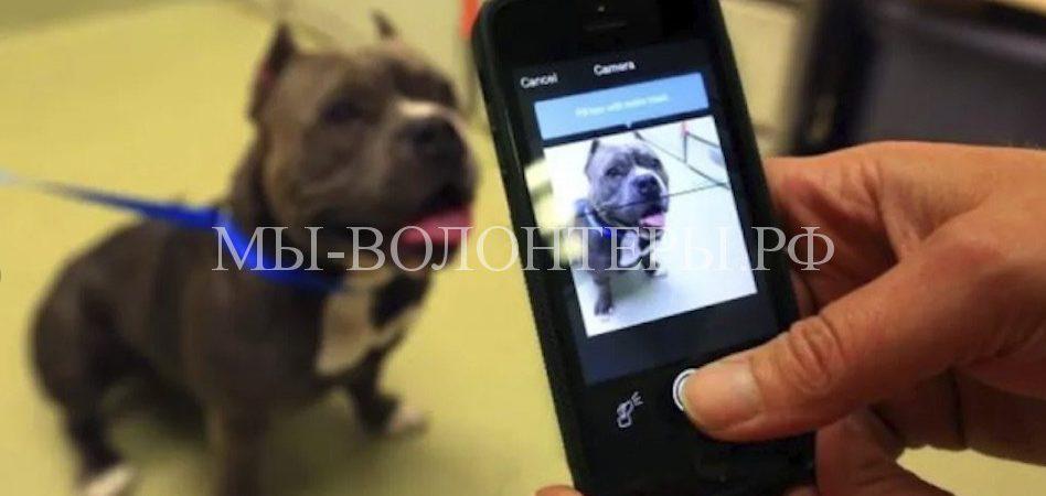Появилась система поиска и распознавания собак по отпечатку носа