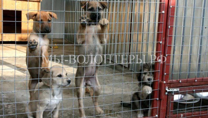 Разработаны нормы содержания бездомных животных