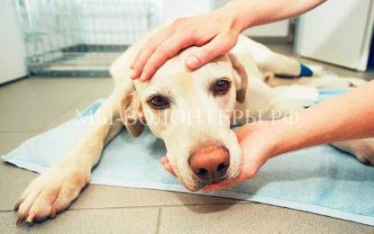 Что делать, если собаку отравили догхантеры