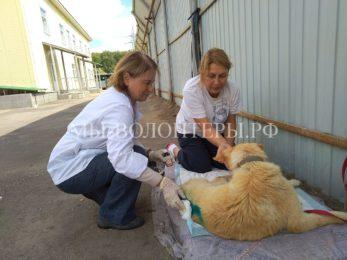 Собак из ветблока  «выгуливают»  И.Сидорова и Г.Н.Колобанова (новый ветврач приюта Щербинка)