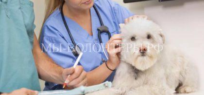Cлужба неотложной ветеринарной помощи
