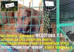 Федотова Л.Б. запугала до слез волонтера Лизу Ч., принуждая признать вину и извиниться перед зооэкстремистом Челкиной