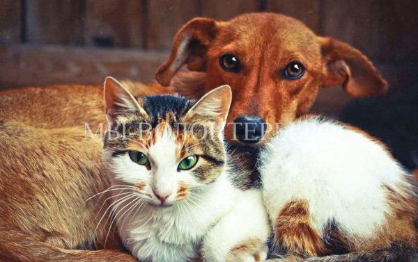 Госдума попросият Минсельхоз пересчитать домашних животных