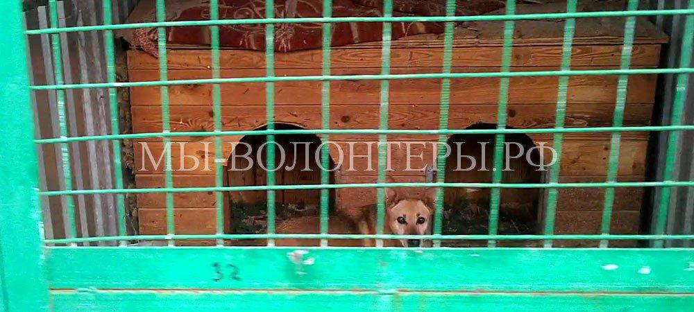 «Федотовщина» в приюте Щербинка: ряды 13-14  в загоне, новый рабочий «ничего не знает, а что надо делать?»
