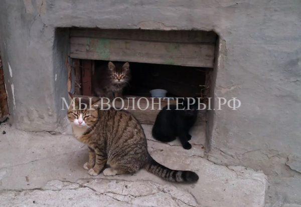 В Санкт-Петербурге стартовала акция «Окошки для кошки»