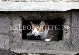 Подготовлен проект постановления - держать открытыми окна в подвальные помещения многоквартирных домов для доступа беспризорных животных