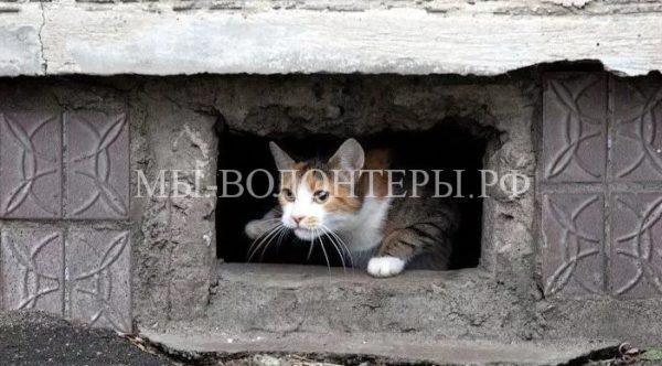 Подготовлен проект постановления — держать открытыми окна в подвальные помещения многоквартирных домов для доступа беспризорных животных