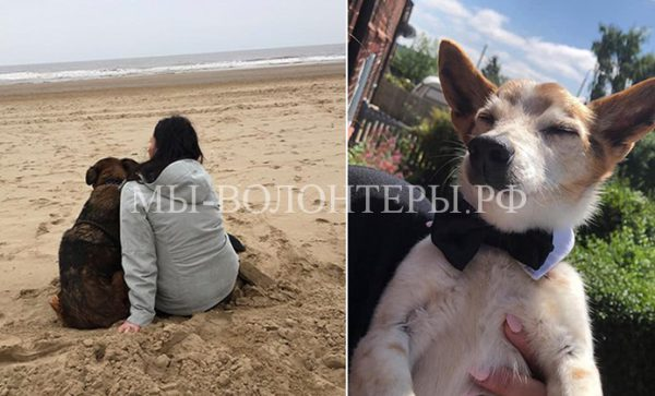 Медсестра-пенсионерка организовала собачий хоспис изабирает изприюта собак надоживание