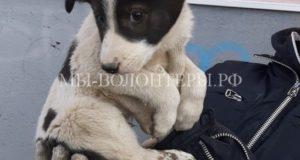 Спасение щенка, застрявшего под бетонной плитой
