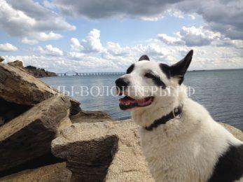 Пес Белый спасен и теперь живет в Крыму