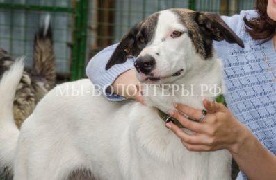В Италии представили законопроект о защите прав собак
