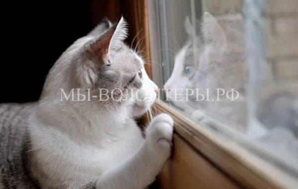 Карантин из-за бешенства объявлен в Солнцево на западе Москвы