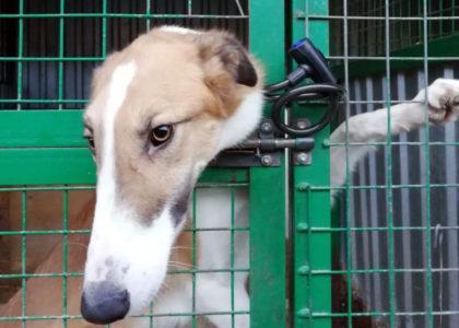 Вольер 26-10 судимая Челкина запирает собак в вольерах, начальница приюта Федотова молчит
