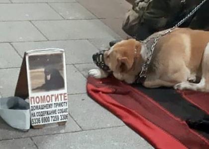 мошенники-попрошайки-с-собаками-у-метро-Сокольники-и-Славянский-бульвар