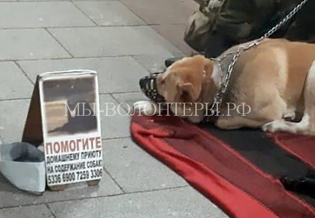 Внимание! Под видом волонтёров мошенники-попрошайки с собаками у м.Сокольники, Славянский бульвар, сообщайте в полицию!