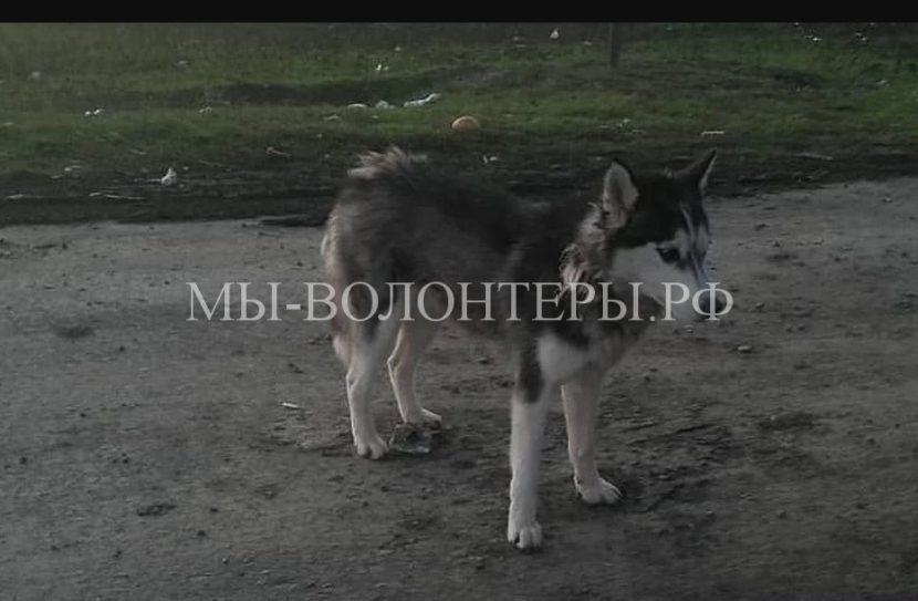 Чтобы спасти собак, ростовским волонтерам пришлось проехать 600 километров