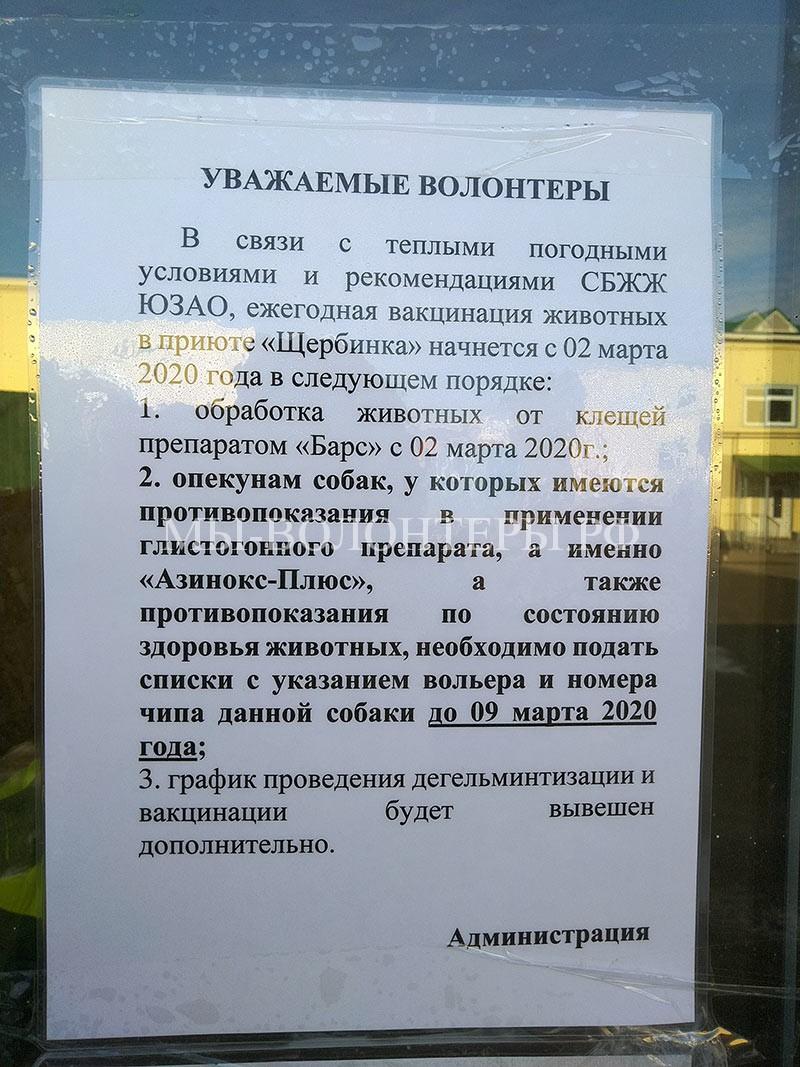 график вакцинации собак приюта Щербинка март 2020