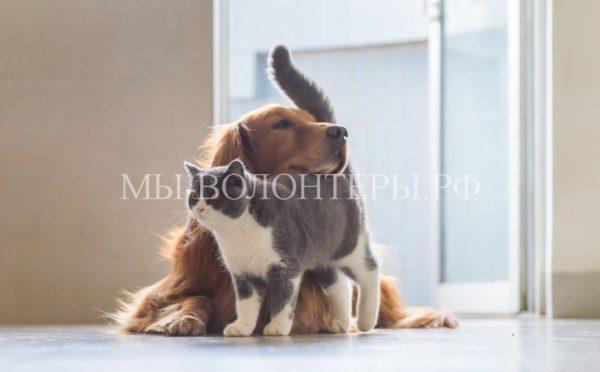 Тематические занятия и лекции для столичных владельцев домашних животных