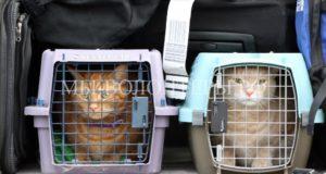 В Госдуме, Общественной палате и Минтрансе обсуждают новые правила перевозки животных в самолетах