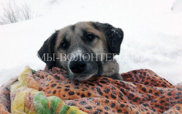 Жители Мурманска спасли жизнь собаке, которую сбила машина. Астра пролежала на дне огромного котлована почти двое суток