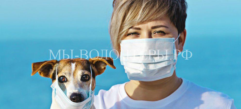 Можно ли заразитьсякоронавирусом COVID-19от домашних животных или заразить их