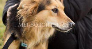 C начала года из московских приютовзабралиболее 1370 животных