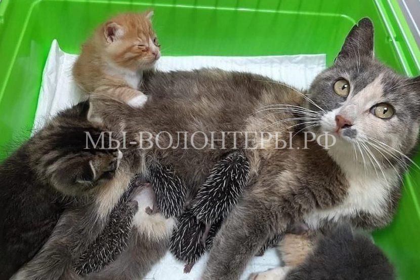 В Приморье кошка усыновила ежика и крошечного щенка