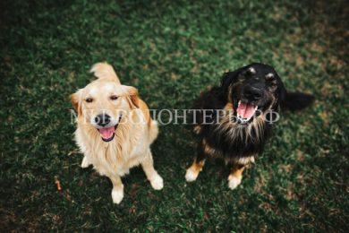 Госдума начала работу над проектом об обязательной регистрации собак