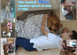 Наш нежный Макс передаёт Привет из Дома от всей своей дружной семьи Кирилла и Алтынай!! Спасибо  волонтеру Алле Булычевой за очень
