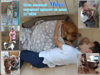 Наш нежный Макс передаёт Привет из Дома от всей своей дружной семьи Кирилла и Алтынай!! Спасибо  волонтеру Алле Булычевой за очень «добрые ручки» для Макса!!