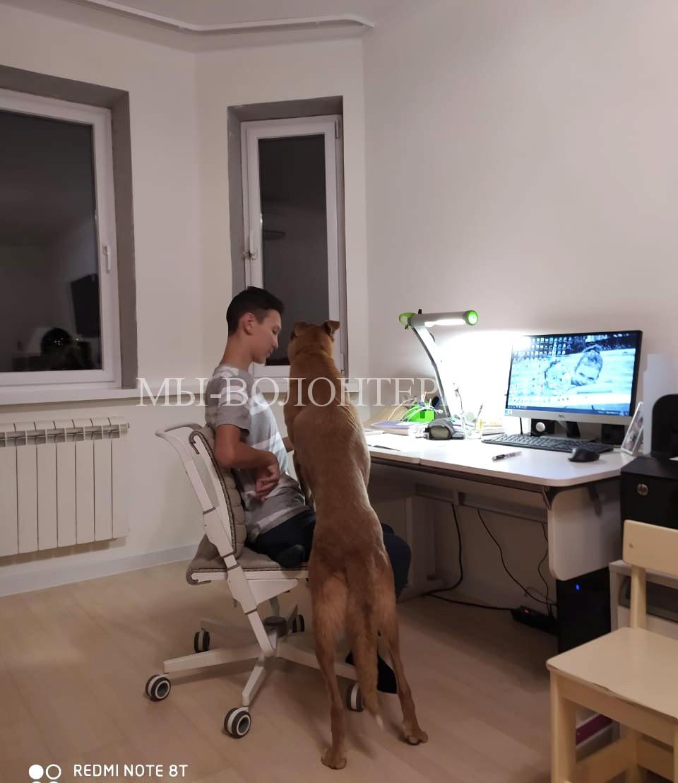 В первый же вечер Макс стал помогать Даниилу (сыну Кирилла и Алтынай) делать дистанционные уроки