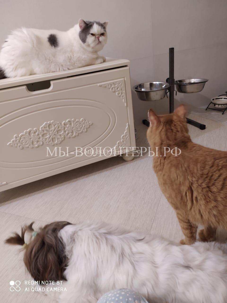 Вот, кстати, новые друзья Макса - это 3 кошки и девочка с косичкой Голди