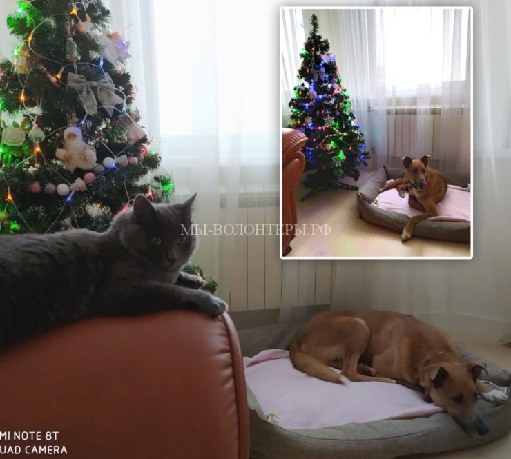 Макс передаёт свой первый Новогодний привет из дома: от всей дружной семьи Кирилла и Алтынай!!